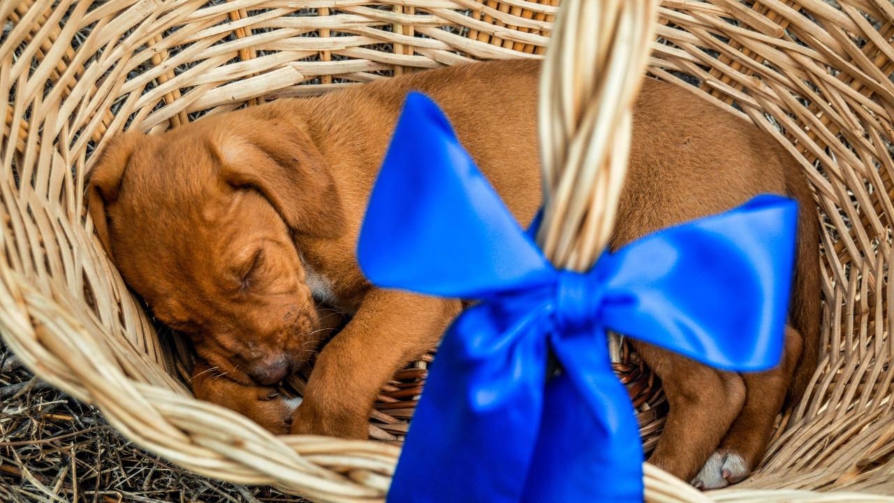 Los veterinarios recuerdan que una mascota no es un juguete
