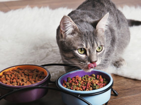 Howtofeedyourcat article content4 032718