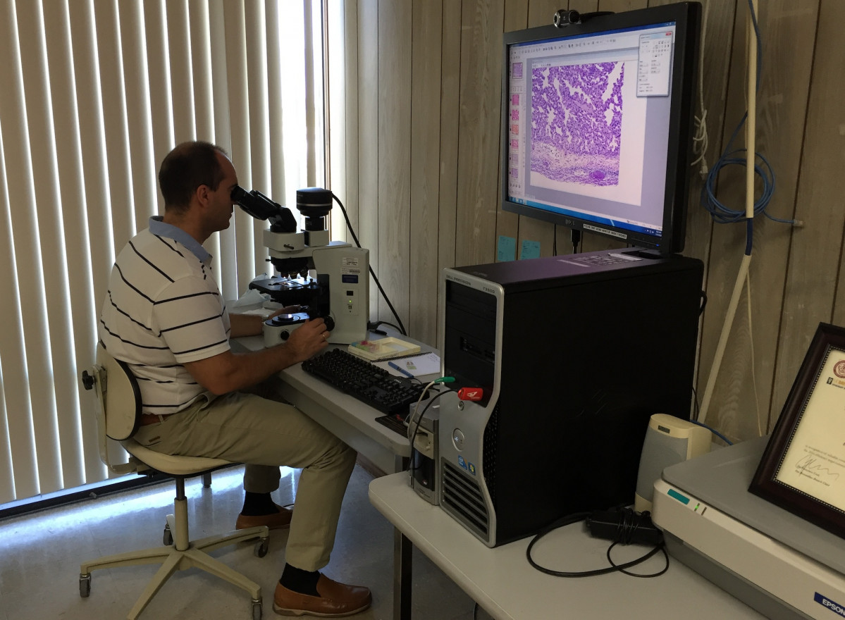 Estudio bacteria caballos corpa ceu uch 3